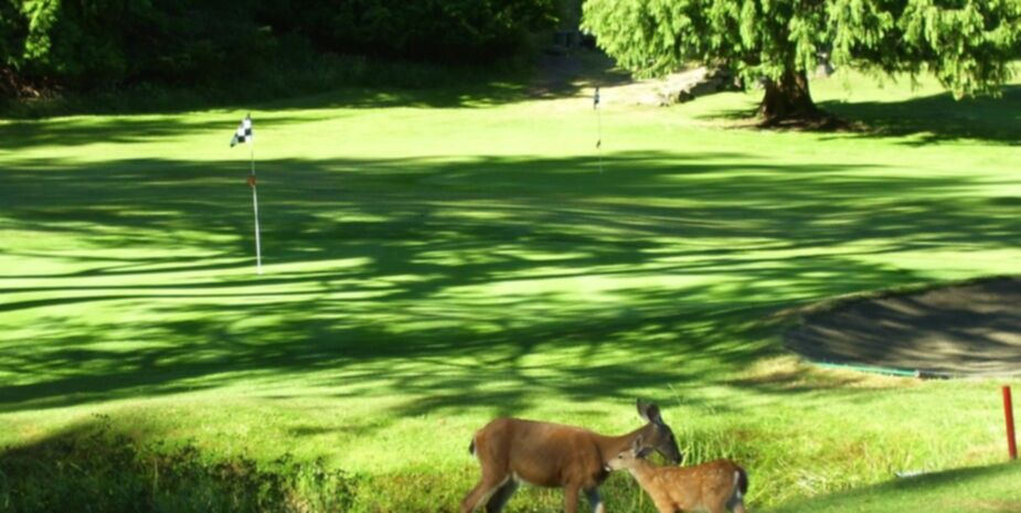 Golfing Activiting around Shady Shores beaches Resort near Qualicum Beach on Vancouver Island BC
